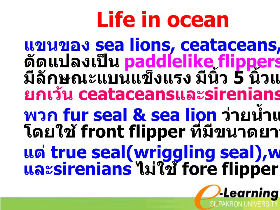 Life in ocean แขนของ sea lions, ceataceans, sirenians, seal