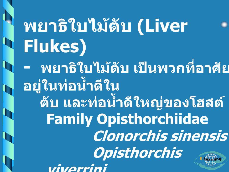 พยาธิใบไม้ตับ (Liver Flukes)