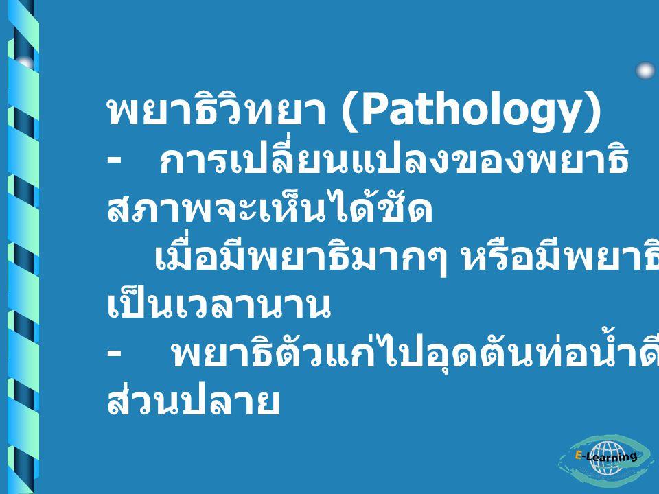 พยาธิวิทยา (Pathology)