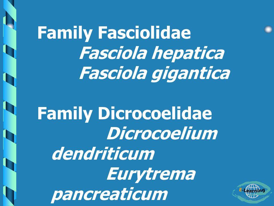 Family Fasciolidae Fasciola hepatica. Fasciola gigantica. Family Dicrocoelidae. Dicrocoelium dendriticum.