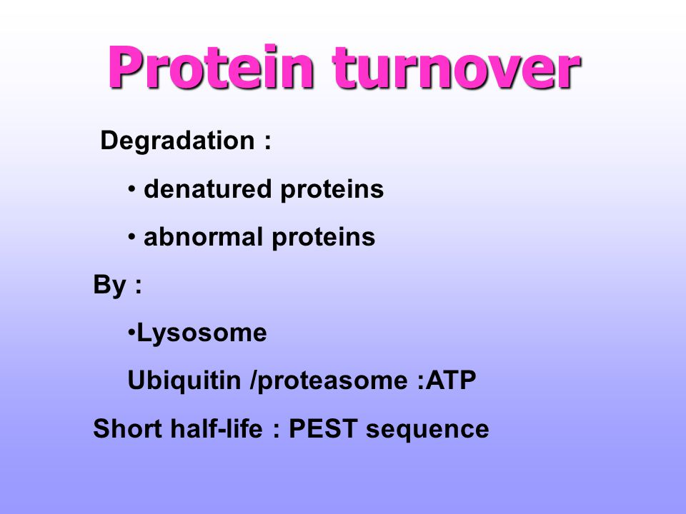 Protein turnover Degradation : denatured proteins abnormal proteins