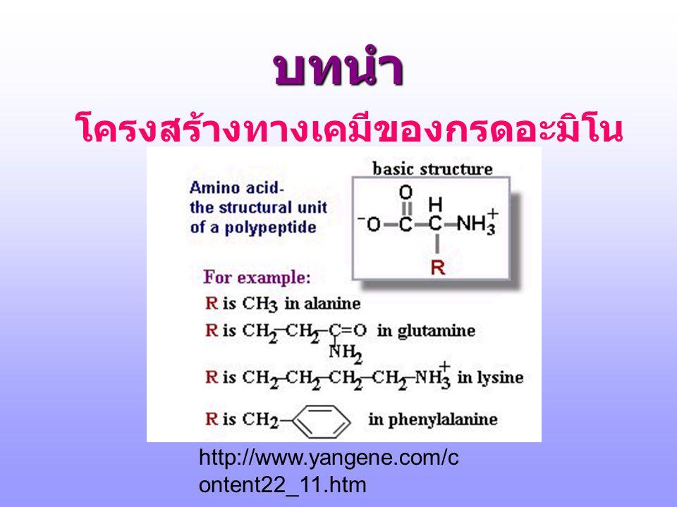 โครงสร้างทางเคมีของกรดอะมิโน