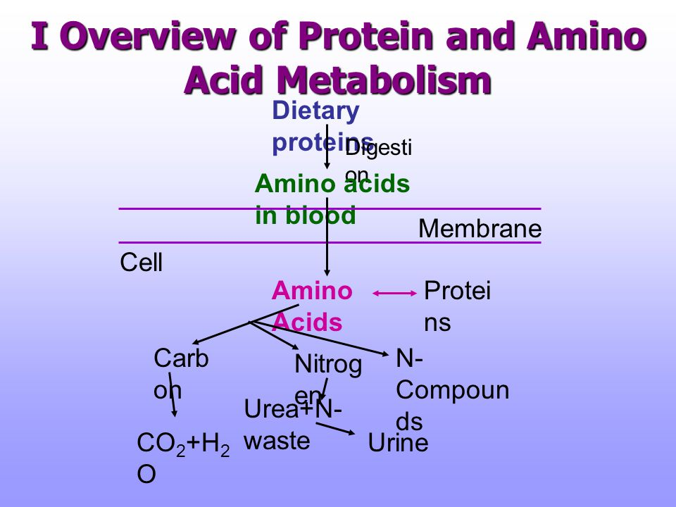 I Overview of Protein and Amino Acid Metabolism