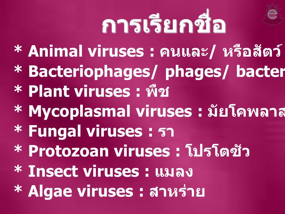 การเรียกชื่อ * Animal viruses : คนและ/ หรือสัตว์