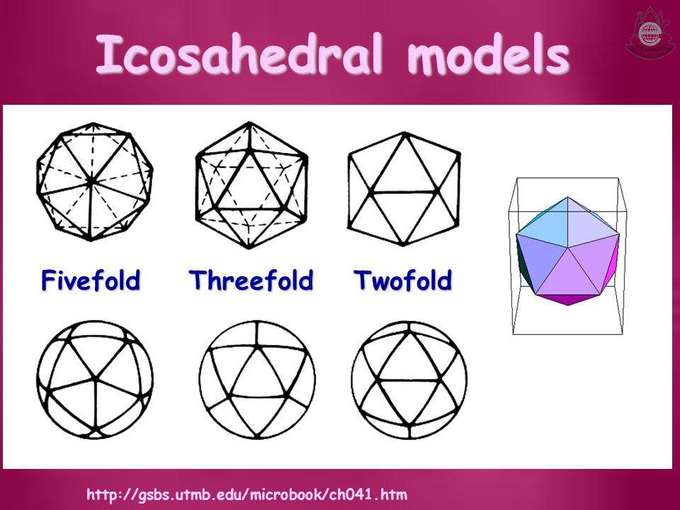 Icosahedral models Fivefold Threefold Twofold