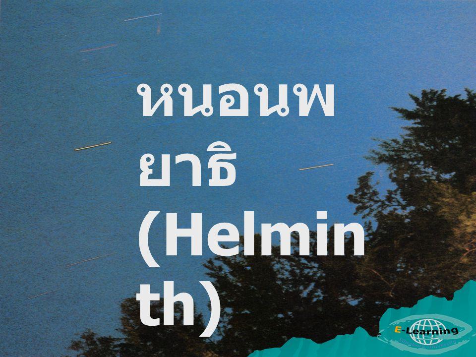 หนอนพยาธิ (Helminth)