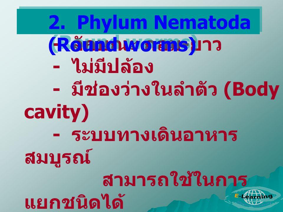 2. Phylum Nematoda (Round worms)