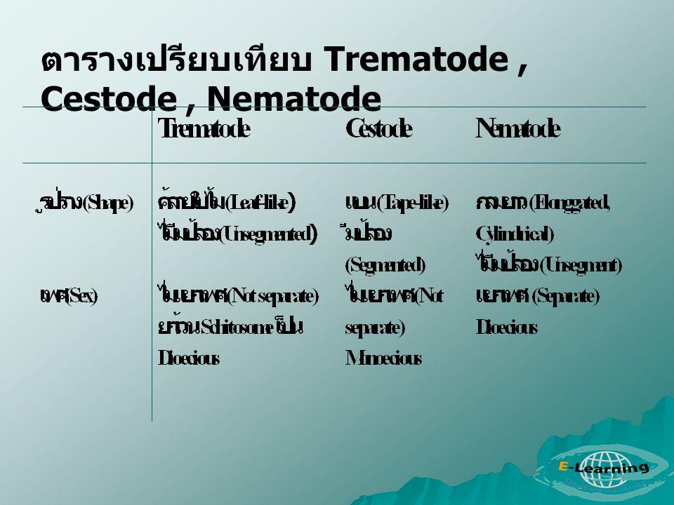 ตารางเปรียบเทียบ Trematode , Cestode , Nematode
