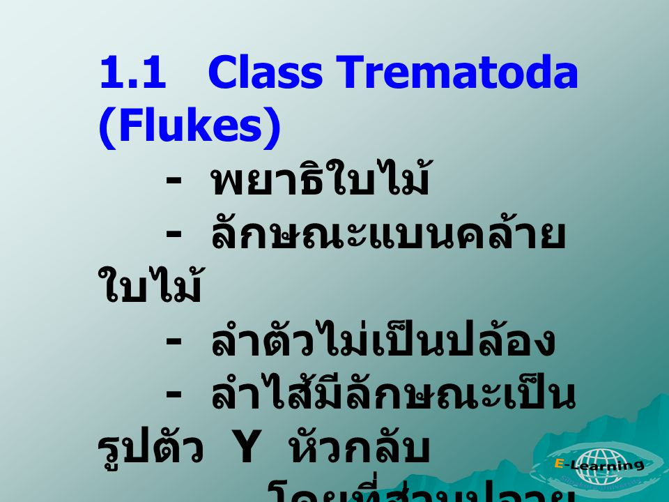 1.1 Class Trematoda (Flukes)