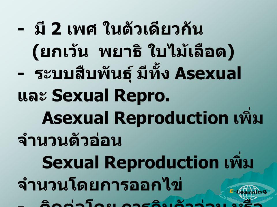 - มี 2 เพศ ในตัวเดียวกัน (ยกเว้น พยาธิ ใบไม้เลือด) - ระบบสืบพันธุ์ มีทั้ง Asexual และ Sexual Repro.