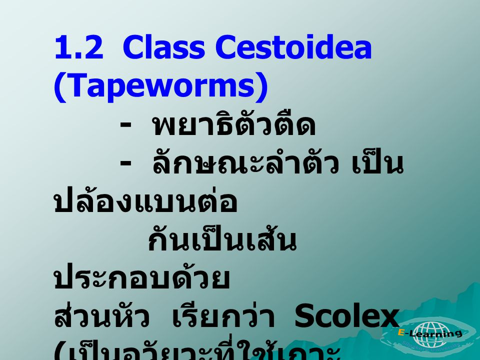 1.2 Class Cestoidea (Tapeworms)