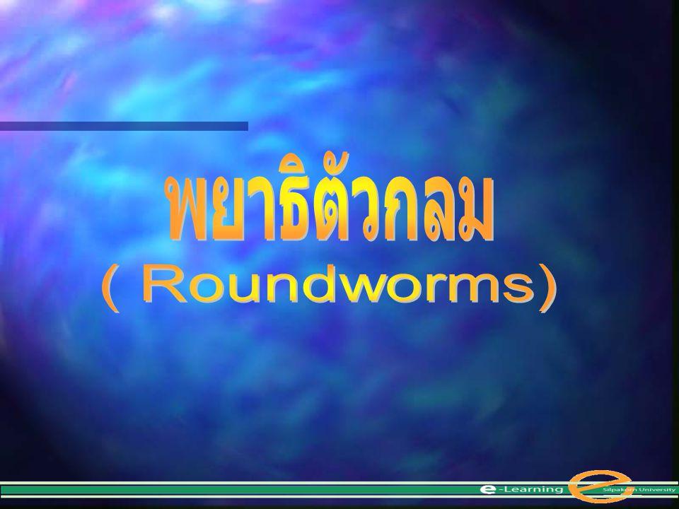พยาธิตัวกลม ( Roundworms)
