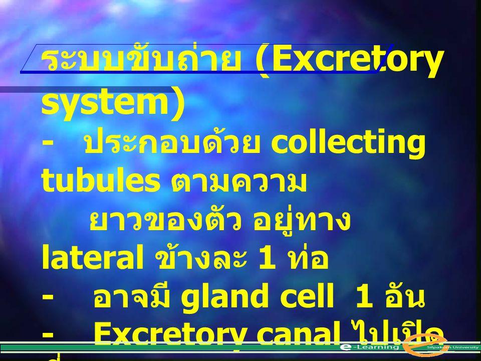 ระบบขับถ่าย (Excretory system)