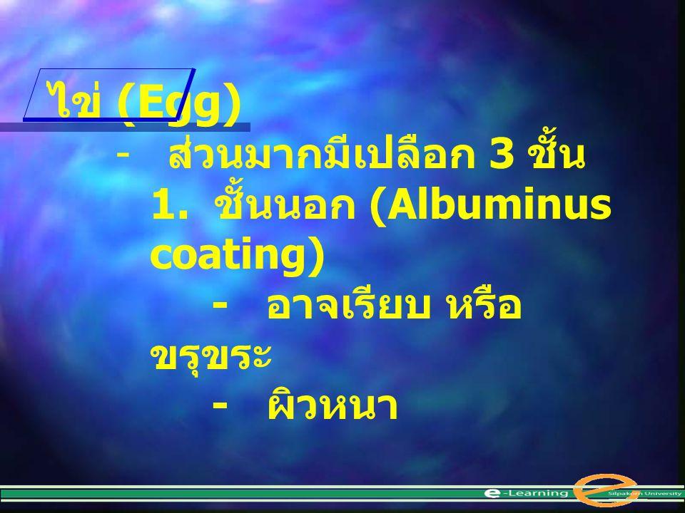 ไข่ (Egg) ส่วนมากมีเปลือก 3 ชั้น 1. ชั้นนอก (Albuminus coating)