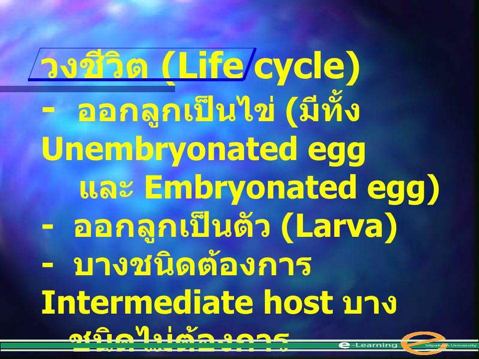 - ออกลูกเป็นไข่ (มีทั้ง Unembryonated egg