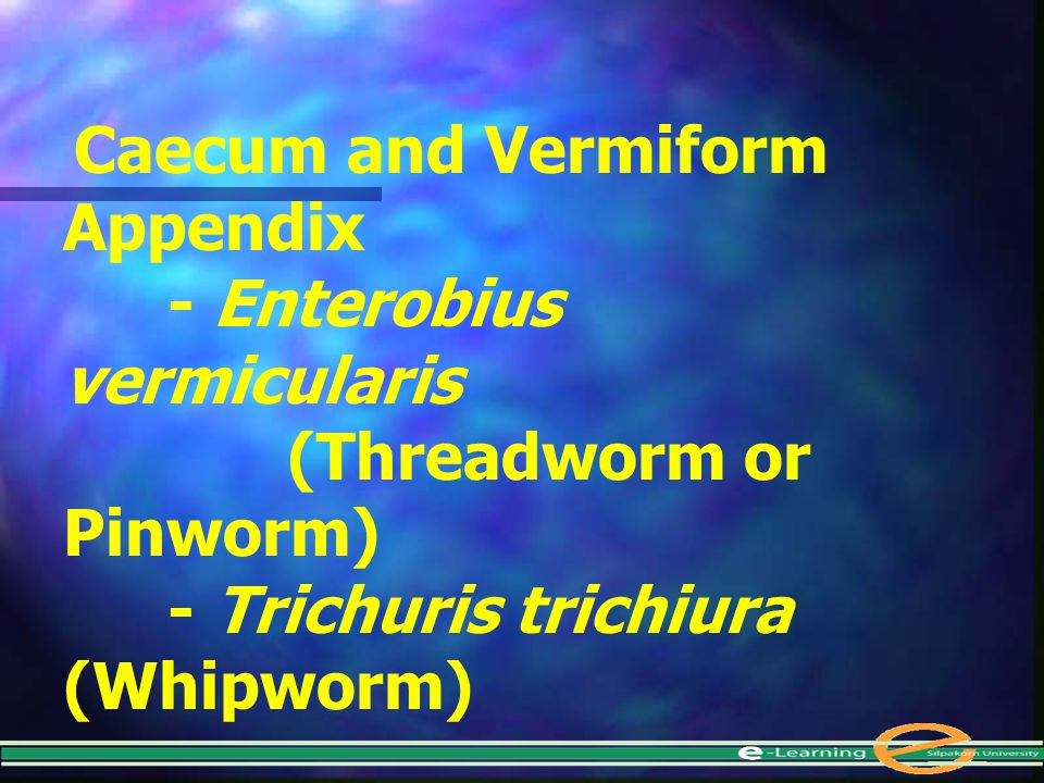 - Enterobius vermicularis (Threadworm or Pinworm)