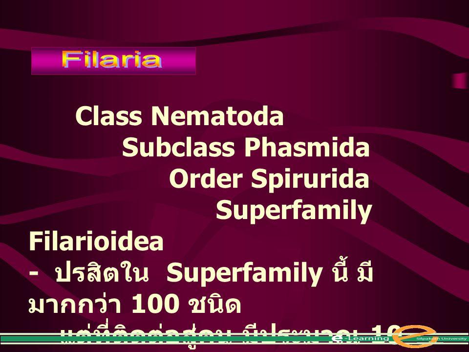 Superfamily Filarioidea - ปรสิตใน Superfamily นี้ มีมากกว่า 100 ชนิด