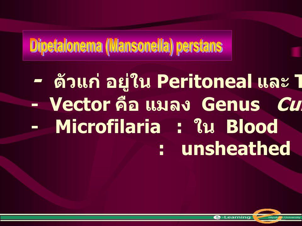 Dipetalonema (Mansonella) perstans
