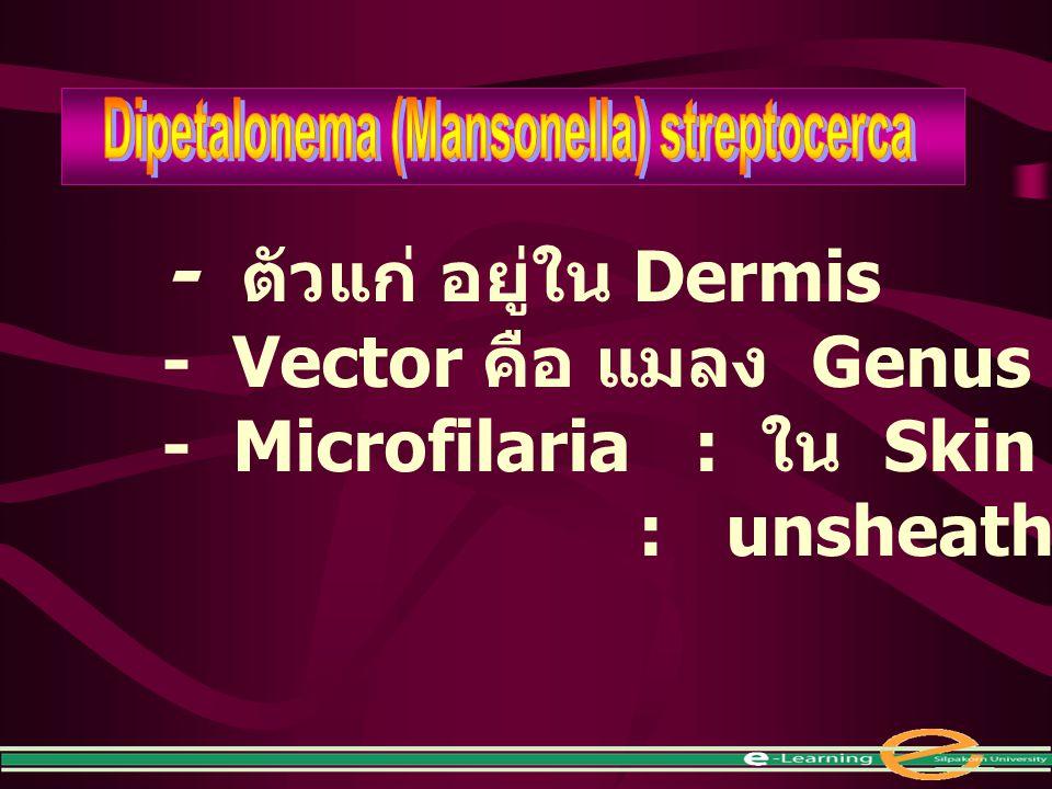 Dipetalonema (Mansonella) streptocerca