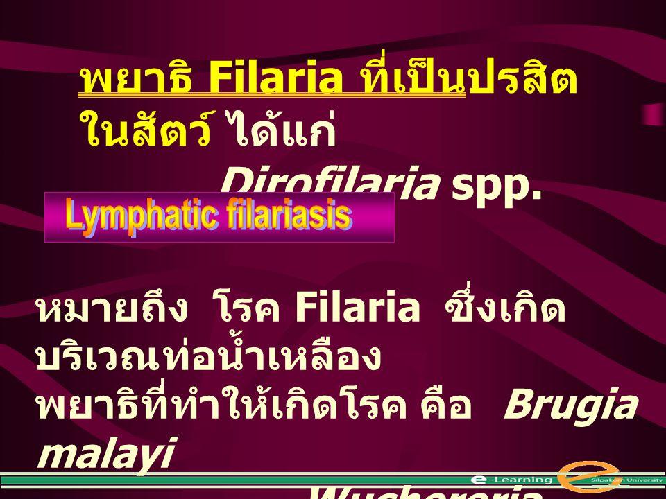 พยาธิ Filaria ที่เป็นปรสิตในสัตว์ ได้แก่ Dirofilaria spp.
