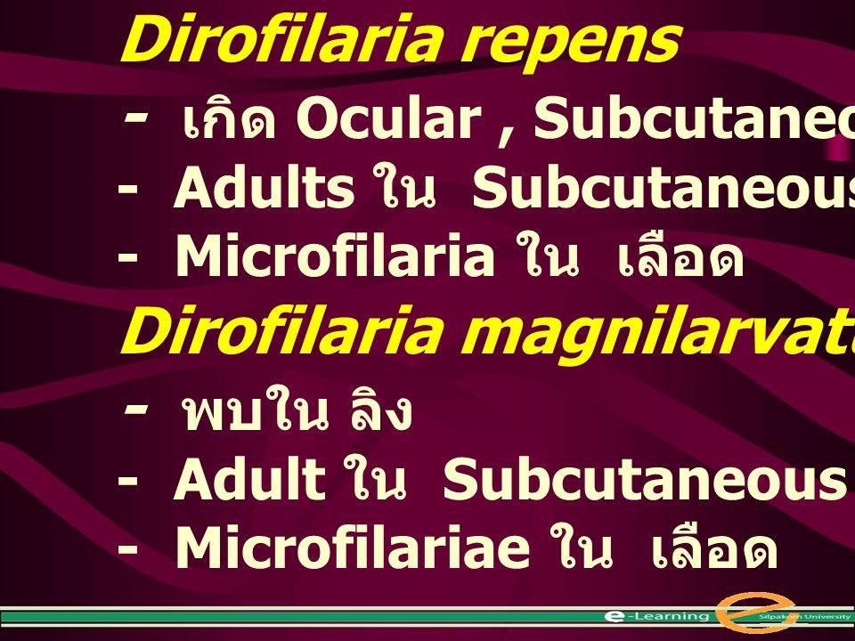 - เกิด Ocular , Subcutaneous ใน คน