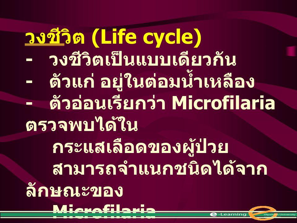 วงชีวิต (Life cycle) - วงชีวิตเป็นแบบเดียวกัน