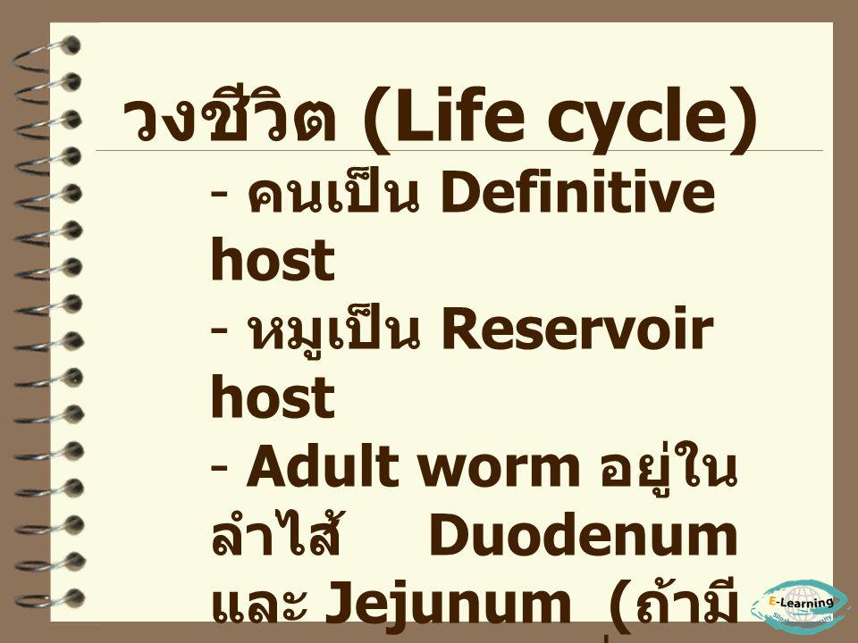 วงชีวิต (Life cycle) คนเป็น Definitive host หมูเป็น Reservoir host