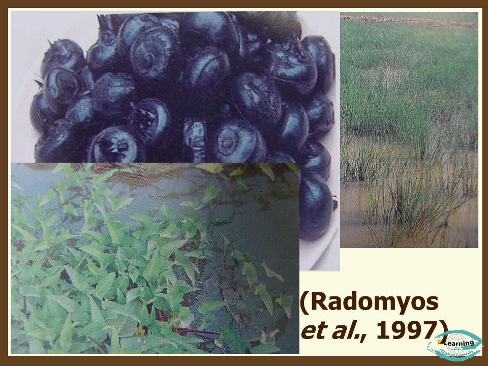 (Radomyos et al., 1997)