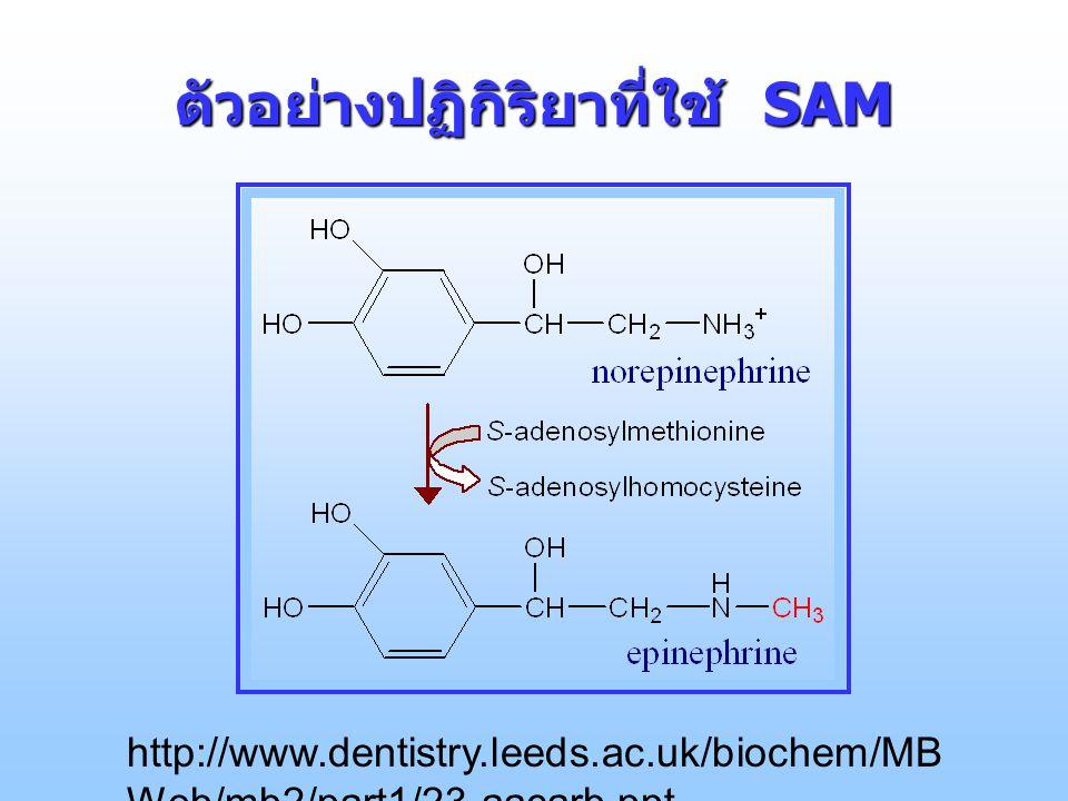 ตัวอย่างปฏิกิริยาที่ใช้ SAM