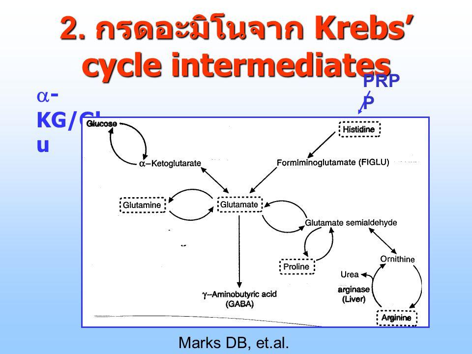 2. กรดอะมิโนจาก Krebs' cycle intermediates
