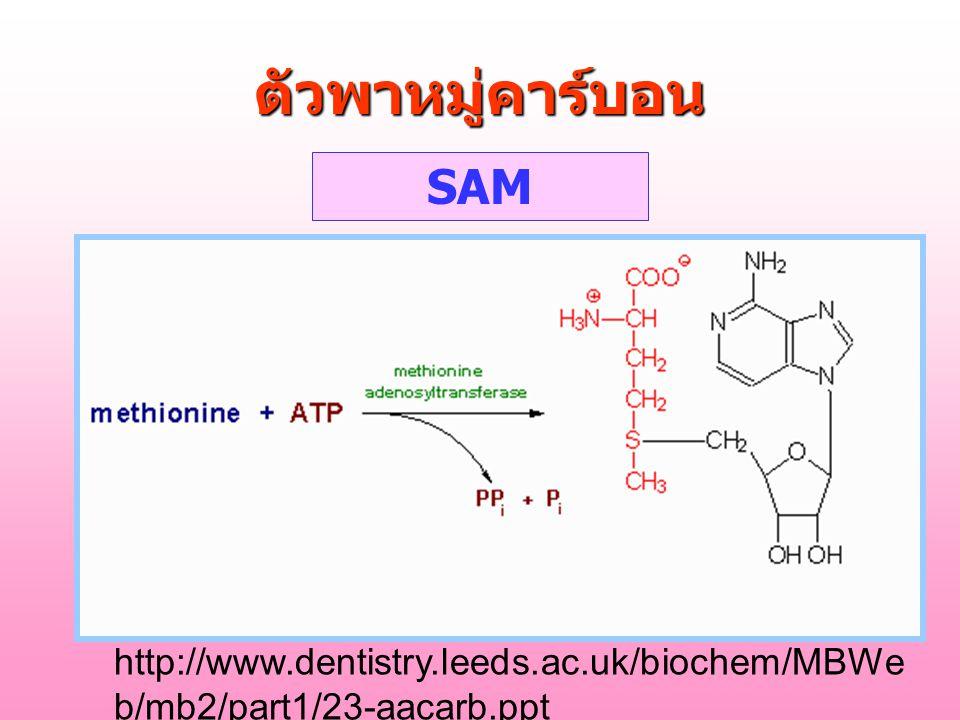 ตัวพาหมู่คาร์บอน SAM http://www.dentistry.leeds.ac.uk/biochem/MBWeb/mb2/part1/23-aacarb.ppt
