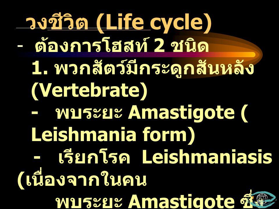 วงชีวิต (Life cycle) ต้องการโฮสท์ 2 ชนิด