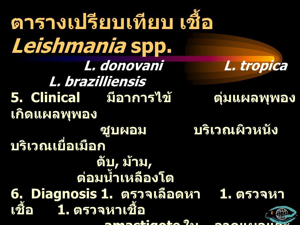 ตารางเปรียบเทียบ เชื้อ Leishmania spp.