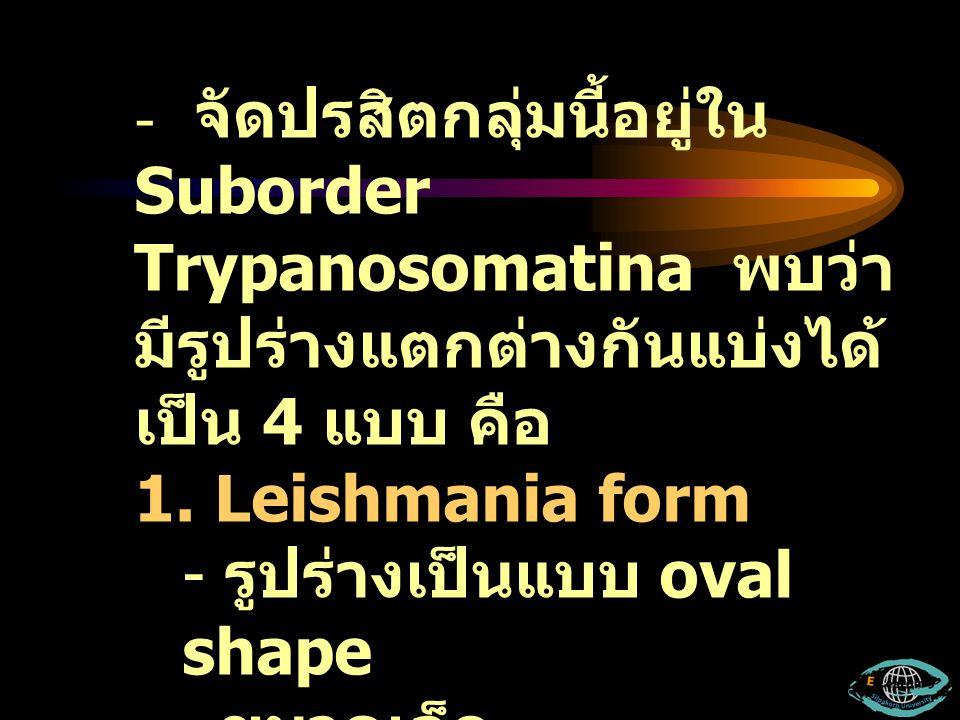 จัดปรสิตกลุ่มนี้อยู่ใน Suborder Trypanosomatina พบว่ามีรูปร่างแตกต่างกันแบ่งได้เป็น 4 แบบ คือ