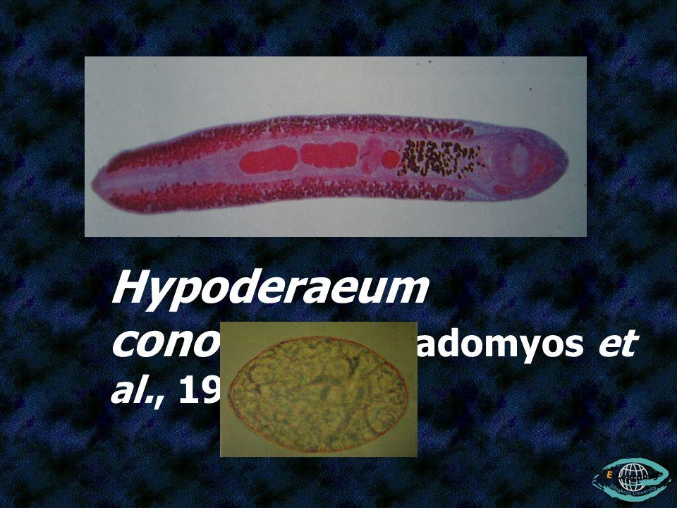 Hypoderaeum conoideum (Radomyos et al., 1997)