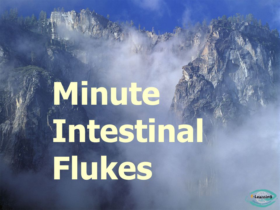 Minute Intestinal Flukes