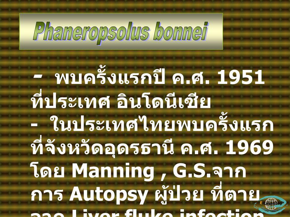 - พบครั้งแรกปี ค.ศ. 1951 ที่ประเทศ อินโดนีเซีย