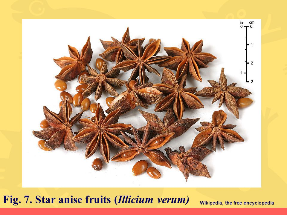 Fig. 7. Star anise fruits (Illicium verum)