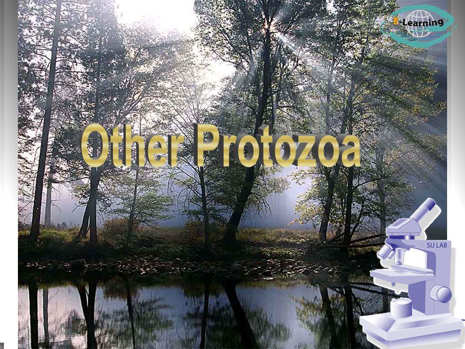 Other Protozoa