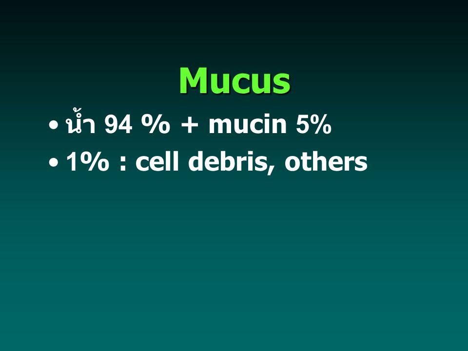Mucus น้ำ 94 % + mucin 5% 1% : cell debris, others