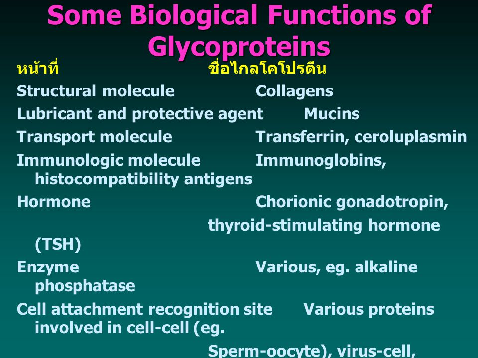 Some Biological Functions of Glycoproteins