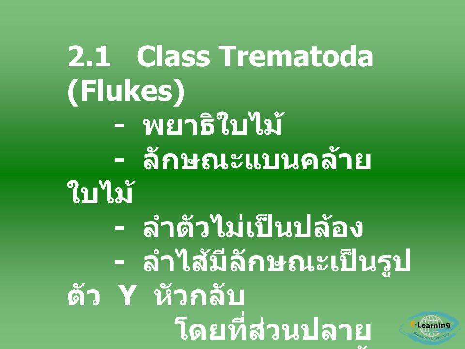 2.1 Class Trematoda (Flukes)