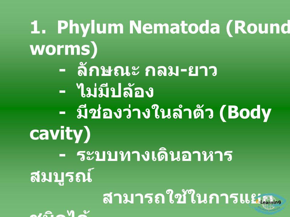 1. Phylum Nematoda (Round worms)