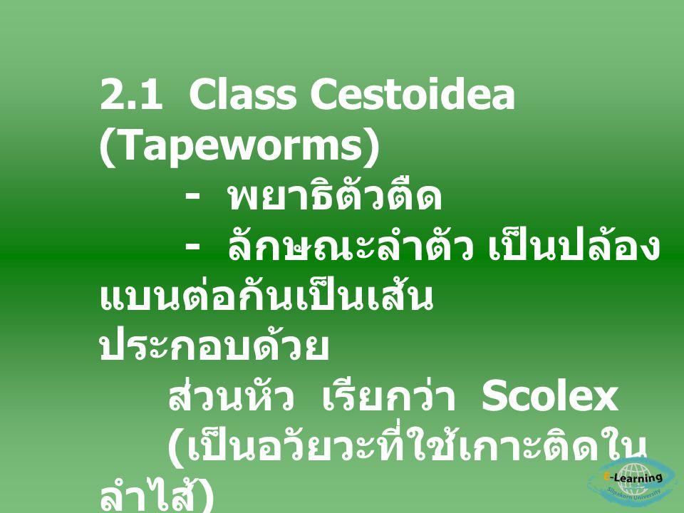 2.1 Class Cestoidea (Tapeworms)