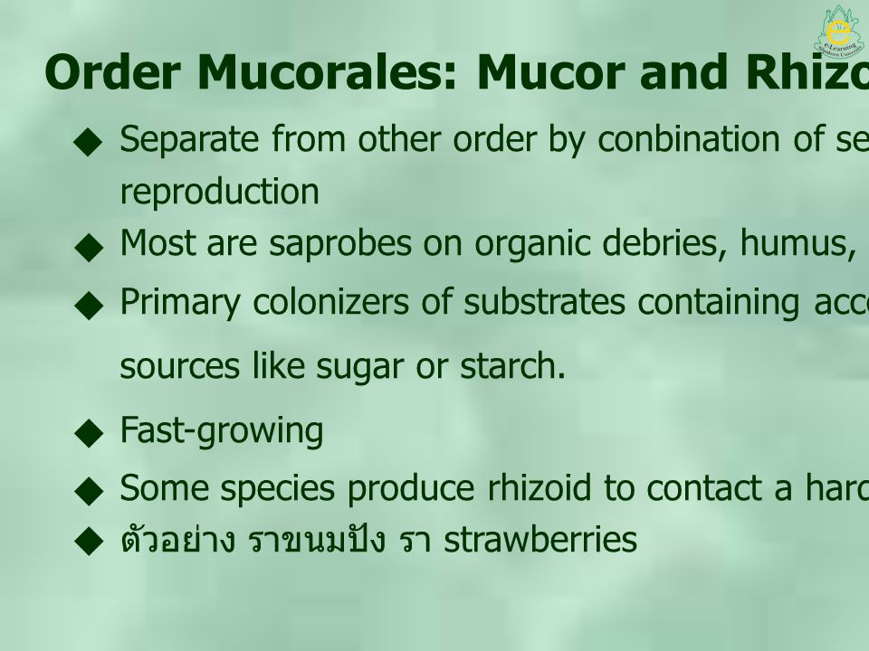 Order Mucorales: Mucor and Rhizopus