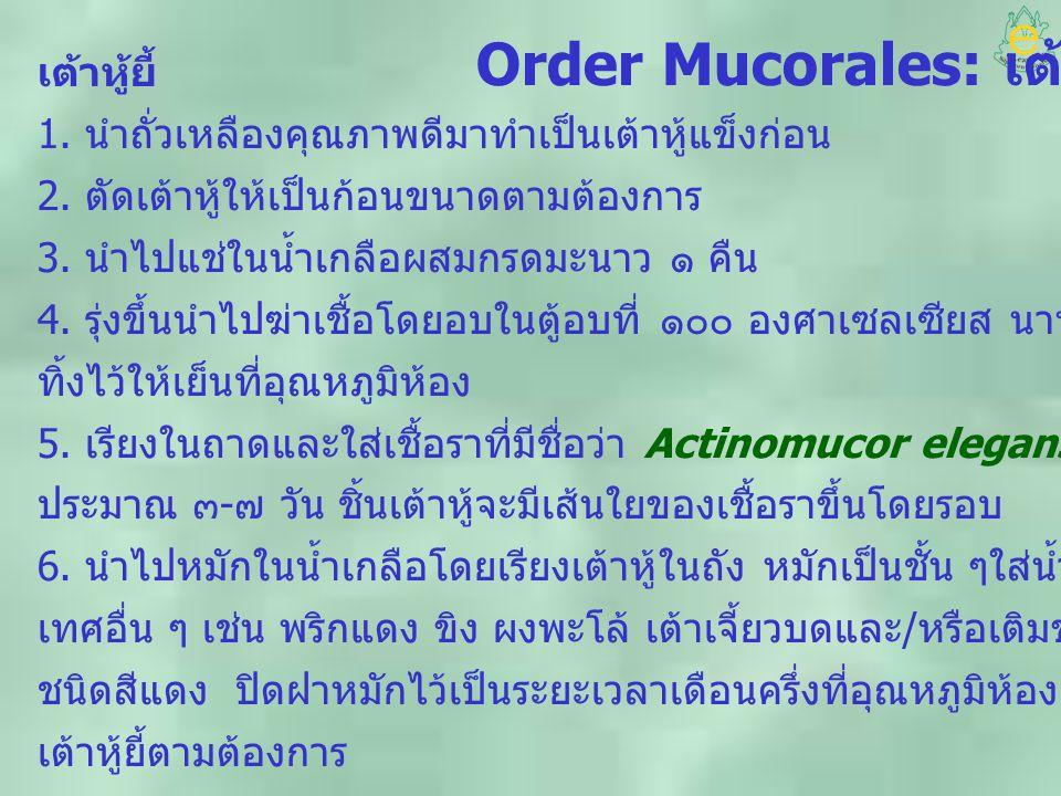 Order Mucorales: เต้าหู้ยี้