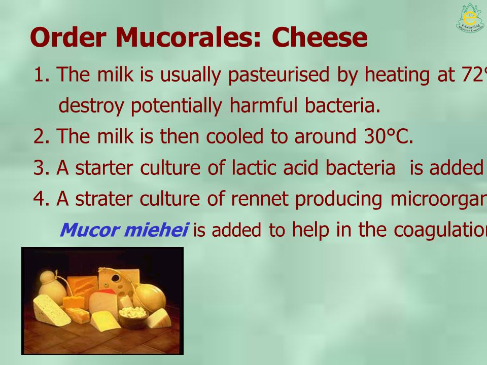 Order Mucorales: Cheese