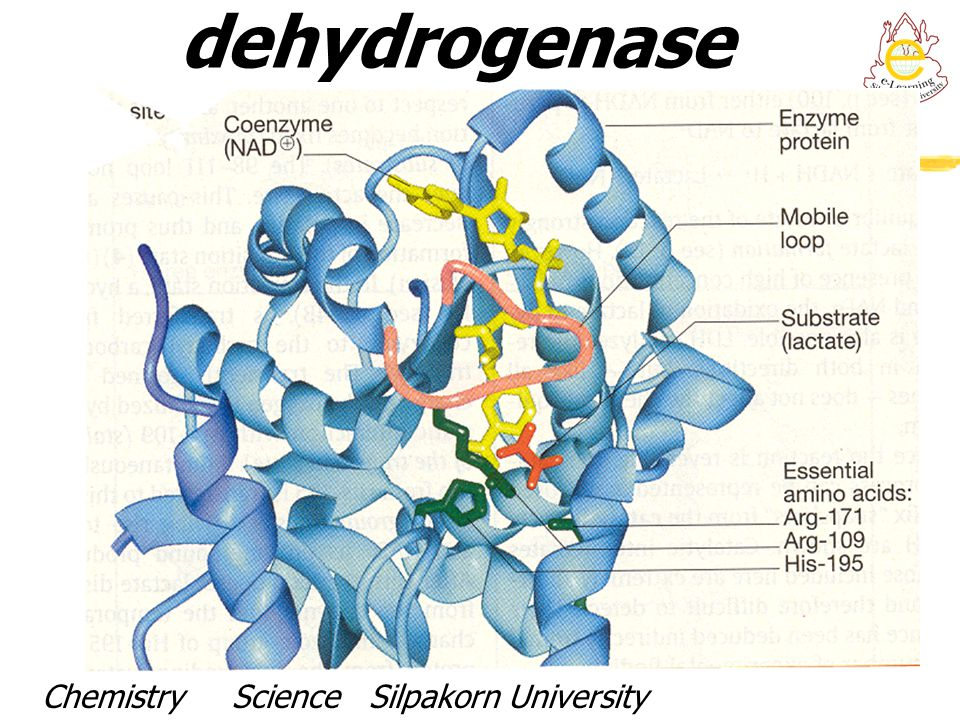 Active site of Lactate dehydrogenase