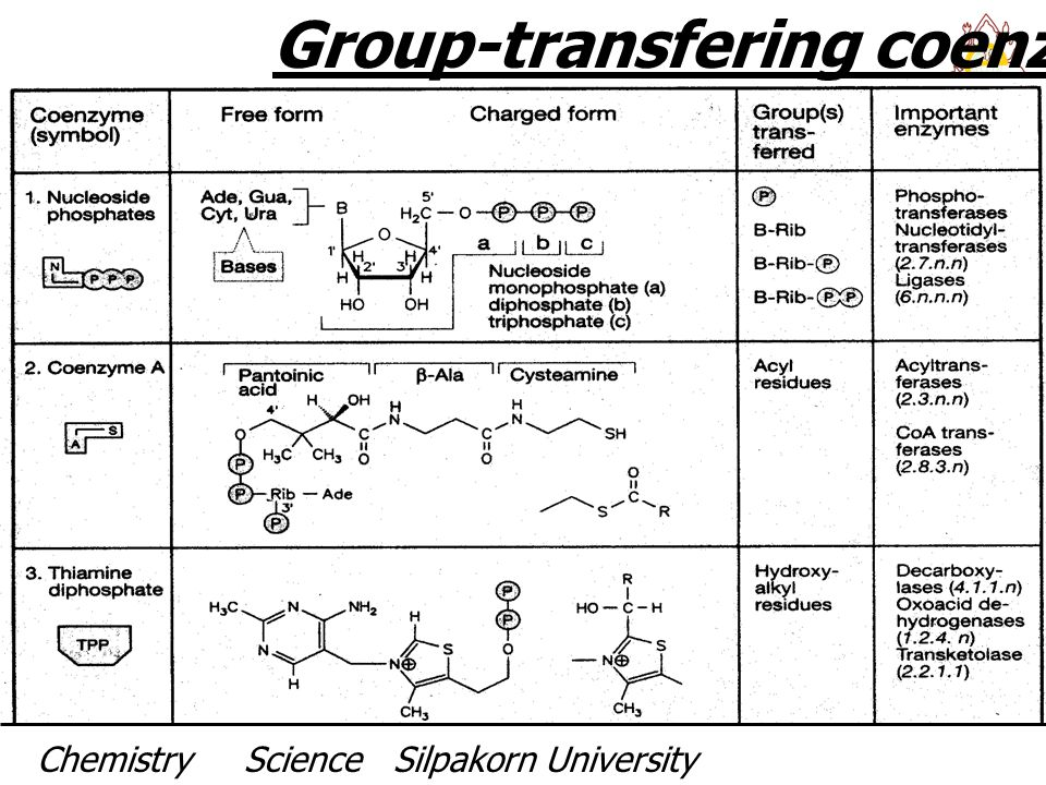 Group-transfering coenzymes I