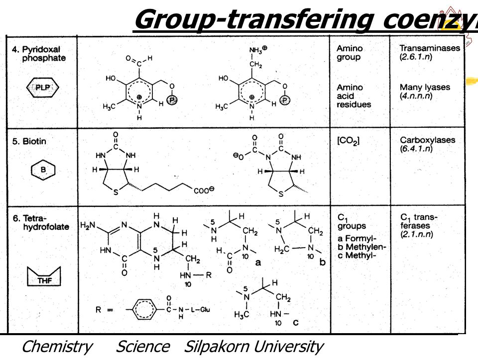 Group-transfering coenzymes II
